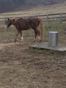 Thome Plumbing horse watering station.